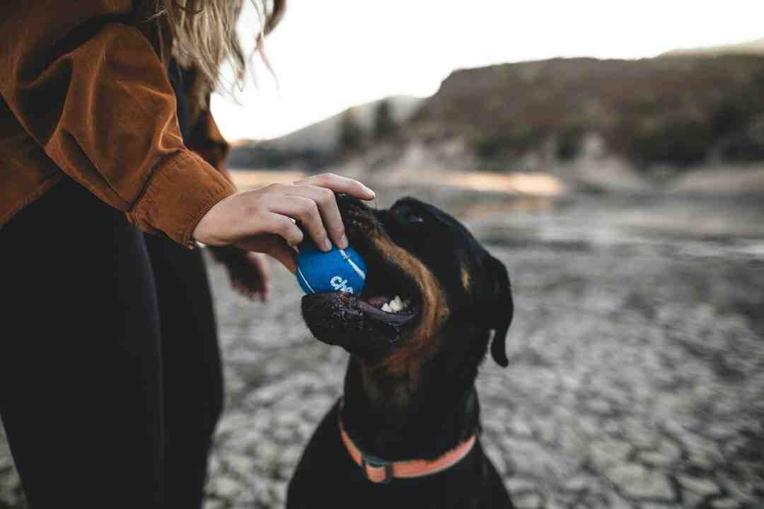 How much is genetic testing for dogs