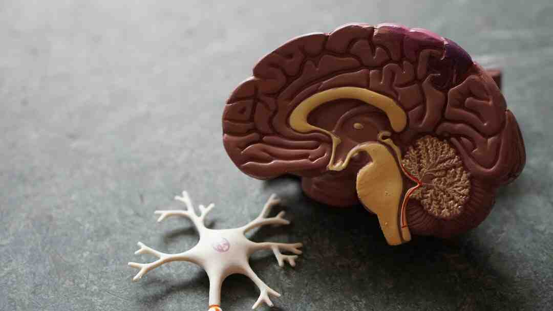 How to Diagnose Vagus Nerve Damage